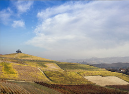 Langa of Barolo - photo by Edoardo Cicchetti - Cedar of Lebanon